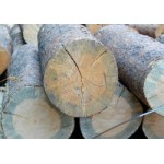 Time to treat your timber